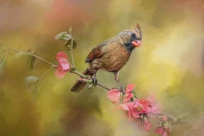 Spring Cardinal 1-Jai Johnson-Giclee Print