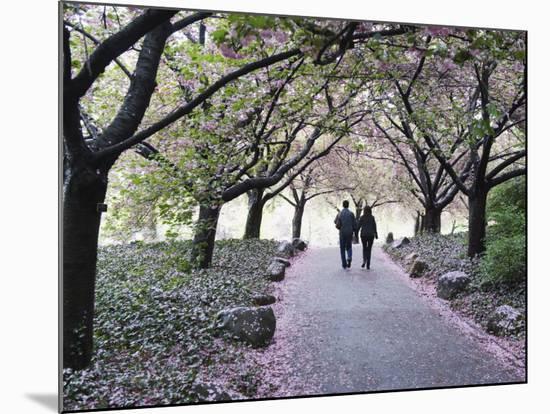 Spring Cherry Blossom, Brooklyn Botanical Garden, Brooklyn-Christian Kober-Mounted Photographic Print