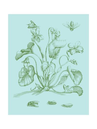 Spring Cyclamen II-Vision Studio-Art Print