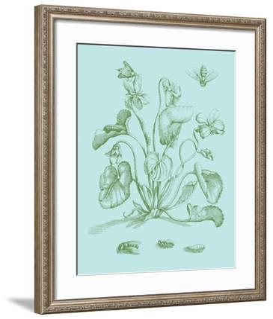 Spring Cyclamen II-Vision Studio-Framed Art Print