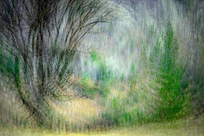 Spring Dance-Ursula Abresch-Photographic Print