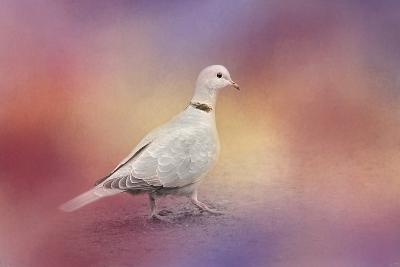 Spring Eurasian Collared Dove-Jai Johnson-Giclee Print