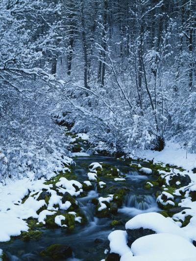 Spring-Fed Creek in Winter, Wasatch-Catch National Forest, Utah, USA-Scott T^ Smith-Photographic Print