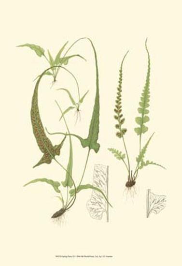 Spring Ferns II-J.h. Emerton-Art Print