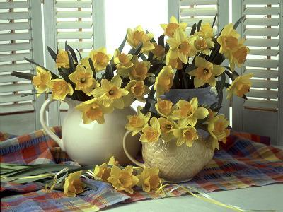 Spring Flower Arrangement of Narcissus in Jugs, Checked Cloth-Erika Craddock-Photographic Print