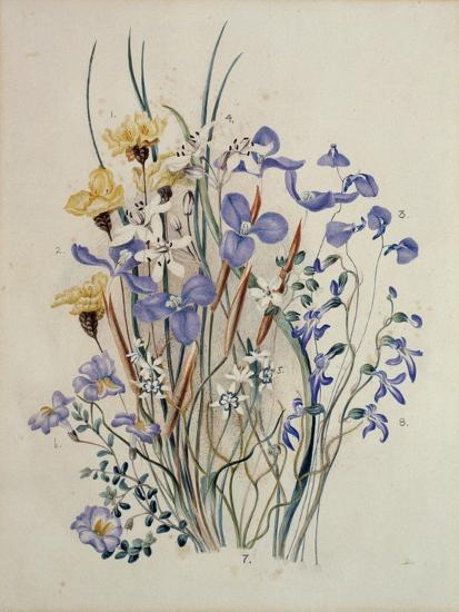 Spring Flowers, 19th Century-Caroline Louisa Meredith-Giclee Print