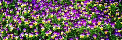 Spring Flowers I-Alan Hausenflock-Photo