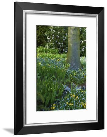 Spring Flowers in Wooded Garden-Anna Miller-Framed Photographic Print