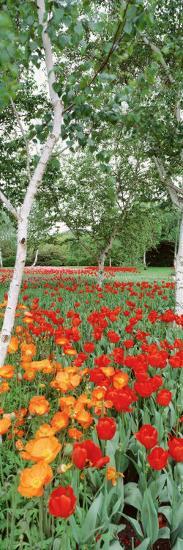Spring Flowers, Lake Burley Griffin, Australia--Photographic Print