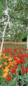Spring Flowers, Lake Burley Griffin, Australia