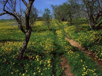 https://imgc.artprintimages.com/img/print/spring-flowers-sao-jao-baroa-algarve-portugal_u-l-p1f5yi0.jpg?p=0