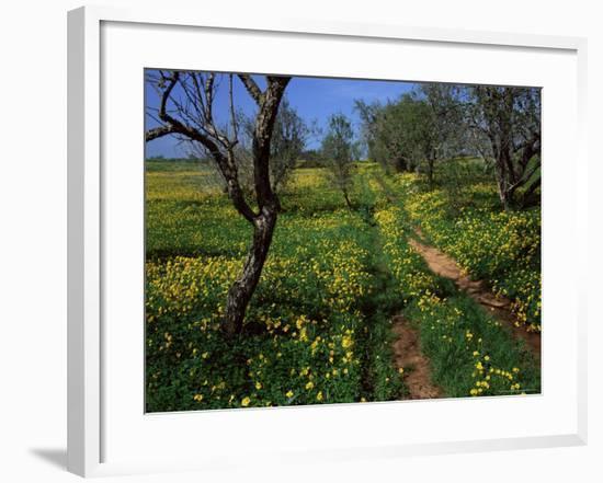 Spring Flowers, Sao Jao, Baroa, Algarve, Portugal-Neale Clarke-Framed Photographic Print