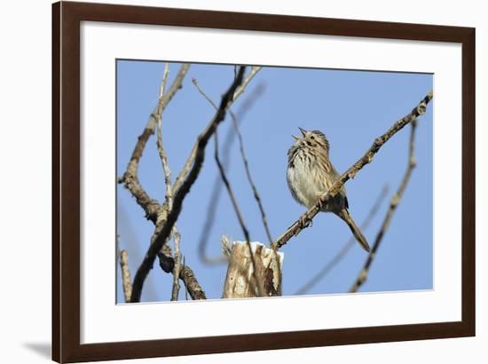 Spring Flowers-Gordon Semmens-Framed Photographic Print