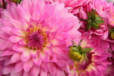 Spring Garden II-Maureen Love-Photographic Print