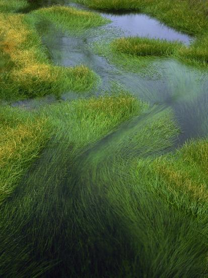 Spring Grasses in Calm Stream, Yellowstone National Park, Wyoming, USA-Jerry Ginsberg-Photographic Print
