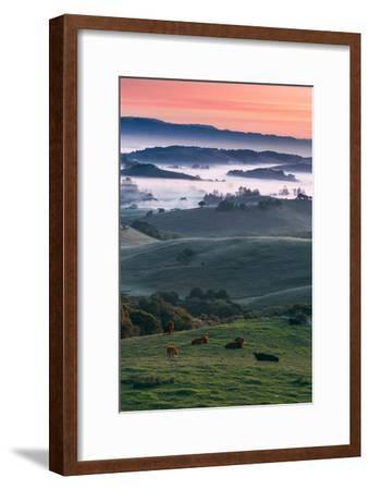 Spring Hills With Fog Petaluma Sonoma California-Vincent James-Framed Photographic Print