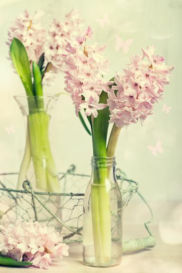 Spring Hyacinth Flowers in Vintage Glass Bottles-Amd Images-Photographic Print