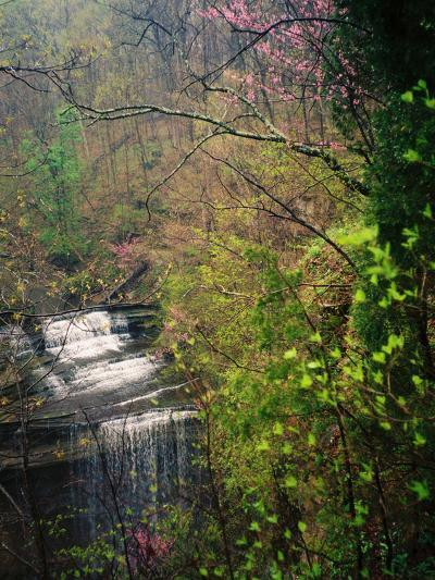 Spring in Clifty Creek State Park, Indiana, USA-Anna Miller-Photographic Print