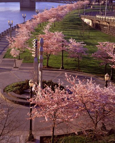 Spring in Portland-Ike Leahy-Photo