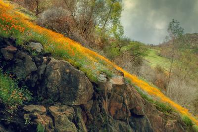 Spring in the Canyon-Vincent James-Photographic Print