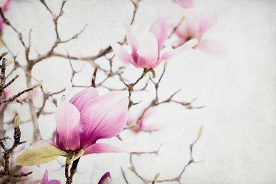 Spring is In the Air I-Elizabeth Urquhart-Photo