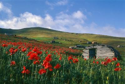 Spring Landscape of Alborz Mountains Filled with Large Red Poppies and Shepherd's Huts-Babak Tafreshi-Photographic Print