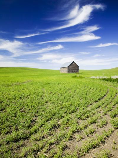 Spring Lentil Crop and Old Barn, Idaho, USA-Terry Eggers-Photographic Print