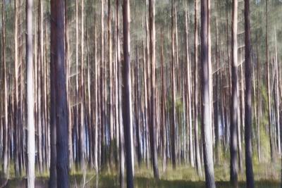 https://imgc.artprintimages.com/img/print/spring-light-1_u-l-q1gvvol0.jpg?p=0