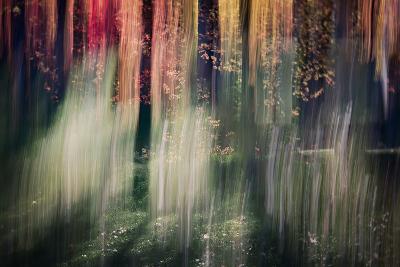 Spring Light-Ursula Abresch-Photographic Print
