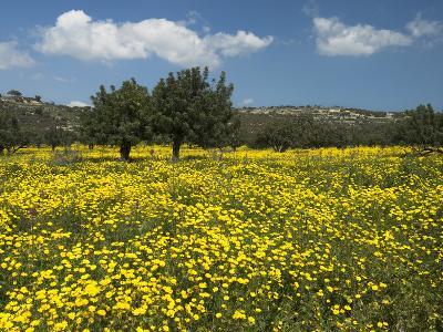 Spring Meadow, Near Limassol, Cyprus, Europe-Stuart Black-Photographic Print
