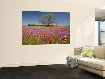 Spring Mesquite Trees Growing in Wildflowers, Texas, USA-Julie Eggers-Wall Mural