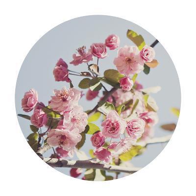 Spring Morning - Sphere-Irene Suchocki-Giclee Print