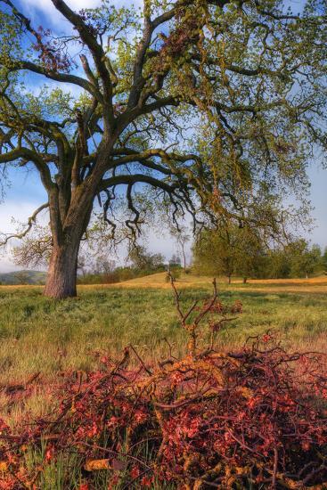 Spring Oak Scene, Central Valley, California-Vincent James-Photographic Print