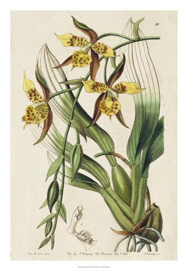 Spring Orchid I-Ridgeway-Giclee Print