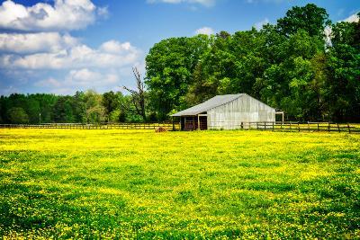 Spring Pasture I-Alan Hausenflock-Photo