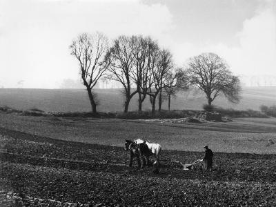 Spring Ploughing 1938--Photographic Print