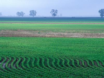 Spring Plowed Field of Crops-Gayle Harper-Photographic Print