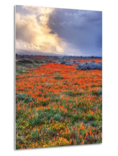 Spring Storm-Vincent James-Metal Print