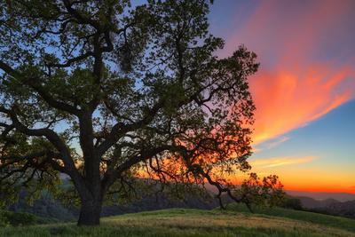 https://imgc.artprintimages.com/img/print/spring-sunset-oak-tree-from-mount-diablo-contra-costa-walnut-creek_u-l-q1ae0i60.jpg?p=0