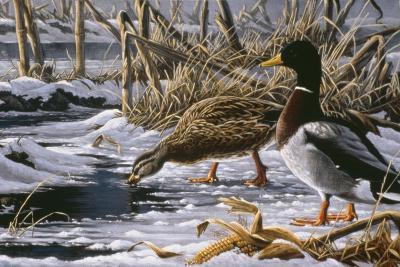 Spring Thaw - Mallards-Wilhelm Goebel-Giclee Print