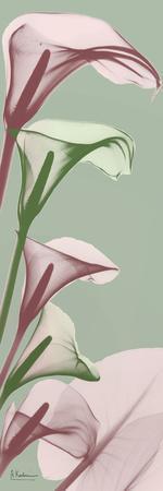 https://imgc.artprintimages.com/img/print/spring-time-calla-lilies_u-l-q1bbzel0.jpg?p=0