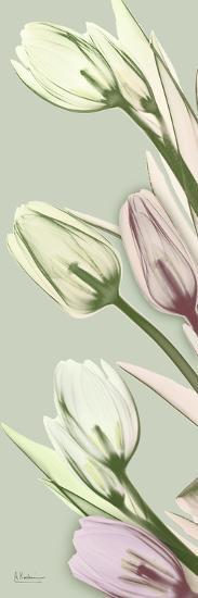 Spring Time Tulips-Albert Koetsier-Photo