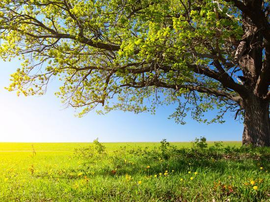 Spring Tree with Fresh Green Leaves on a Blooming Meadow-Dudarev Mikhail-Photographic Print