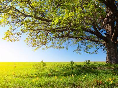 https://imgc.artprintimages.com/img/print/spring-tree-with-fresh-green-leaves-on-a-blooming-meadow_u-l-q103mn10.jpg?p=0