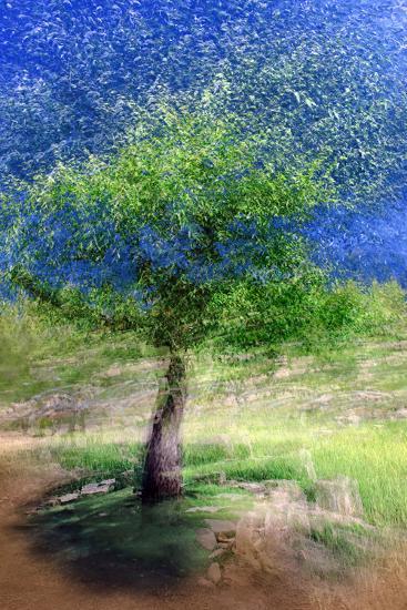 Spring Tree-Ursula Abresch-Photographic Print