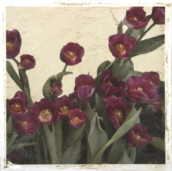 Spring Tulips II-Megan Meagher-Giclee Print