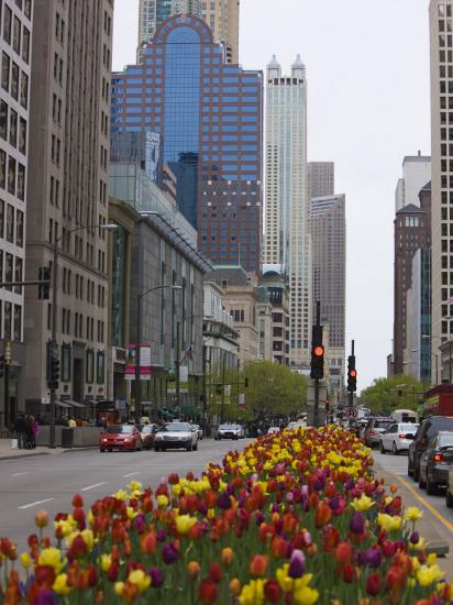 Spring Tulips on North Michigan Avenue, Chicago, Illinois, United States of America, North America-Amanda Hall-Photographic Print