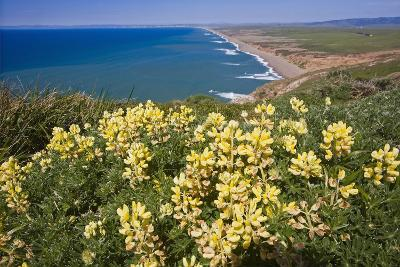 Spring Vista, Point Reyes, California-George Oze-Photographic Print