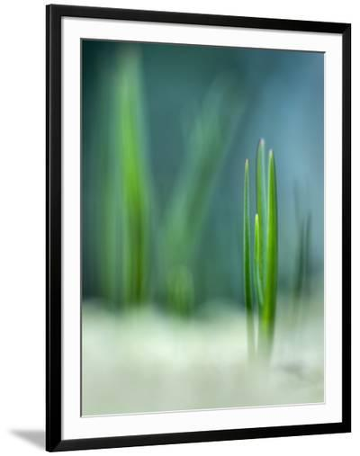Spring--Framed Photographic Print