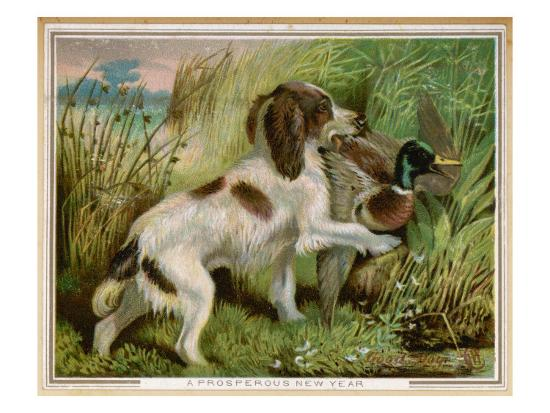 Springer Spaniel Card--Giclee Print